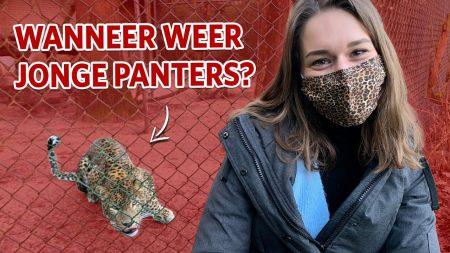Burgers Zoo – Panters Fokken Is Geen Pretje!