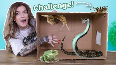 OnneDi – What's In The Box Challenge **Met Reptielen**